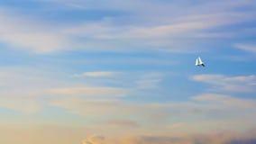 Palomas que vuelan, cielo azul, puesta del sol p2 Imagen de archivo libre de regalías