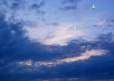 Palomas que vuelan, cielo azul, puesta del sol p3 Imagenes de archivo