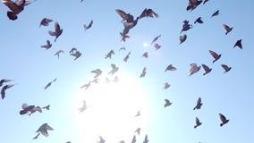 Palomas que vuelan en un paquete en la ciudad de Hudson River Facing New York metrajes