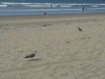Palomas que vuelan gaviota y pelícanos sobre el cielo azul del mar del rompeolas de la explanada de la playa de Ensenada de las o Fotos de archivo