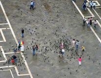 Palomas y gente en Venecia Fotografía de archivo libre de regalías
