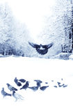 Palomas y gorriones en ciudad del invierno fotos de archivo