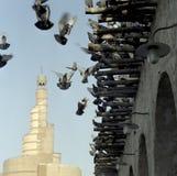 Palomas y mezquita imagen de archivo libre de regalías