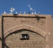 Palomas y palomas Fotos de archivo libres de regalías