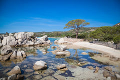 Palombaggia beach at Corsica Royalty Free Stock Photography