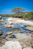 Palombaggia beach at Corsica Royalty Free Stock Photos