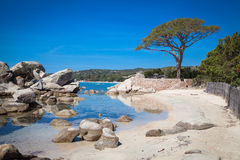 Palombaggia beach at Corsica Stock Photo
