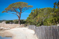 Palombaggia beach at Corsica Stock Image