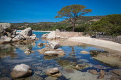Palombaggia beach at Corsica Royalty Free Stock Images