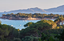 Palombaggia beach. In the south of Corsica is famous for its crystal clear water Stock Image