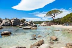 Palombaggia plaża w Corsica wyspie, Francja Obrazy Stock