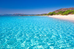 Palombaggia sandy beach with pine trees and azure clear water, Corsica, France Royalty Free Stock Photography