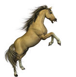 Palomino. A mighty palomino with a beautiful mane and tail hair royalty free illustration