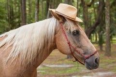 Palomino horse wearing straw hat Stock Image