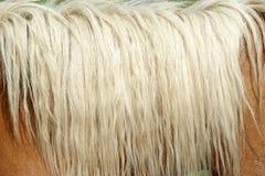 Palomino mane. Closeup of a palomino mane. neck detail Royalty Free Stock Photography