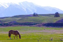 Palomino Mission Mountains Montana Stock Images