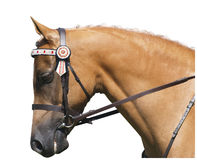 Palomino Portrait. Isolated with clipping path Royalty Free Stock Images