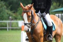 Palominoponyporträt während des Reiterwettbewerbs Lizenzfreies Stockbild