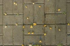Palomitas en la losa Foto de archivo libre de regalías