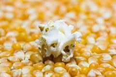Palomitas en las semillas del maíz Fotos de archivo libres de regalías