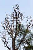 Palos en el árbol Fotografía de archivo