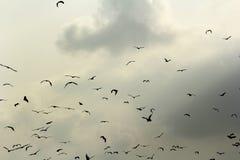 Palos y nubes Foto de archivo
