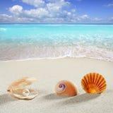 Palourde de perle d'interpréteur de commandes interactif de fond de vacances d'été de plage Image stock