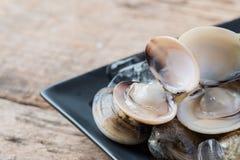 Palourdes comestibles d'eau de mer d'émail de coquille fraîche de venus Images stock