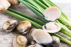 Palourdes comestibles d'eau de mer d'émail de coquille fraîche de venus Photographie stock
