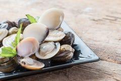 Palourdes comestibles d'eau de mer d'émail de coquille fraîche de venus Photo stock