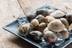 Palourdes comestibles d'eau de mer d'émail de coquille fraîche de venus Photos stock