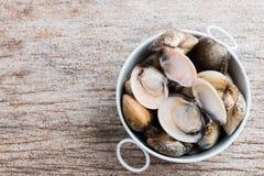 Palourdes comestibles d'eau de mer d'émail de coquille fraîche de venus Image libre de droits