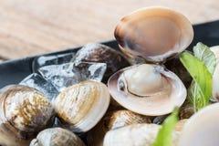 Palourdes comestibles d'eau de mer d'émail de coquille fraîche de venus Image stock