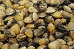 Palourdes comestibles sur l'affichage photographie stock