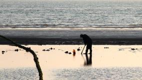 Palourdes creusées dans la plage Image libre de droits