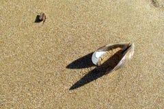 Palourdes de Shell sur le sable photographie stock