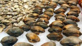 Palourdes fraîches au marché espagnol de fruits de mer photos stock