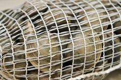 Palourdes fraîches dans le sac de fruits de mer de maille Photos stock
