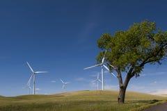Palouse风力场 库存照片