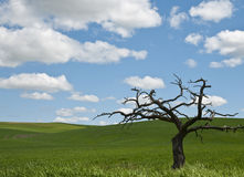palouse δέντρο Στοκ εικόνα με δικαίωμα ελεύθερης χρήσης