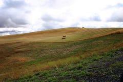 palouse холмов Стоковые Изображения RF