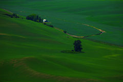 Palouse Colors Royalty Free Stock Image