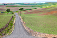 Palouse Country Road Royalty Free Stock Image