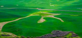 Palouse Field in spring Stock Images