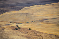 Palouse harvest time. Palouse Hills crop fields at harvest time, Washington state Royalty Free Stock Photos