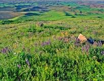 Palouse - het Land van de Tarwe van de Staat van Washington Stock Foto's