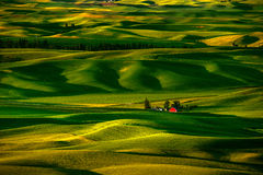 Palouse Hills in the Morning Royalty Free Stock Image