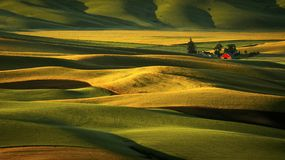 Palouse Hills at Sunrise Stock Photography