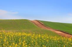 Palouse landscape Stock Image