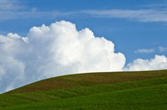 Palouse Landscape. Rolling fields against a background of cumulus clouds and blue sky in the Palouse area of Washington state Stock Photography